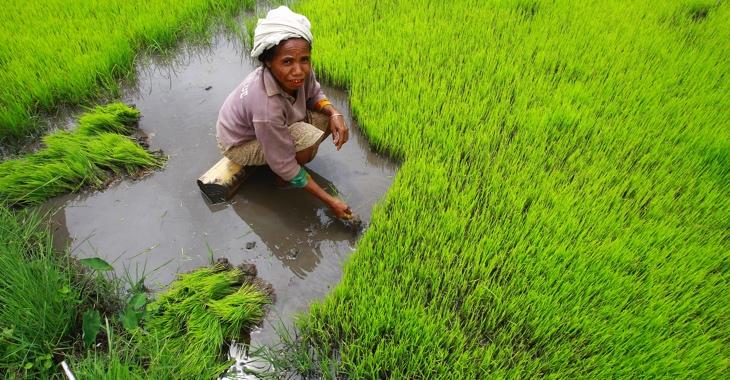 Eine Bäuerin auf einem Reisfeld © UN Photo/Martine Perret