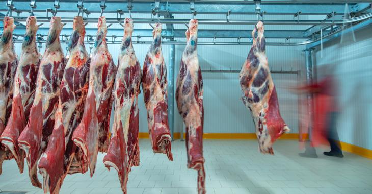 Ein Arbeiter schiebt Rinderhälften im Kühlhaus einer Fleischfabrik © iStock/asikkk