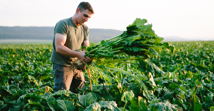 Junger Bauer in einem Zuckerrübenfeld ©iStock/fotografixx