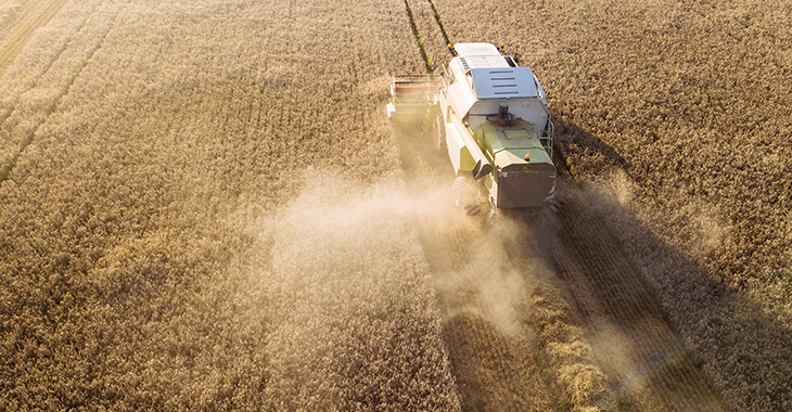 Dürre in Deutschland: Mähdrescher bei der Ernte