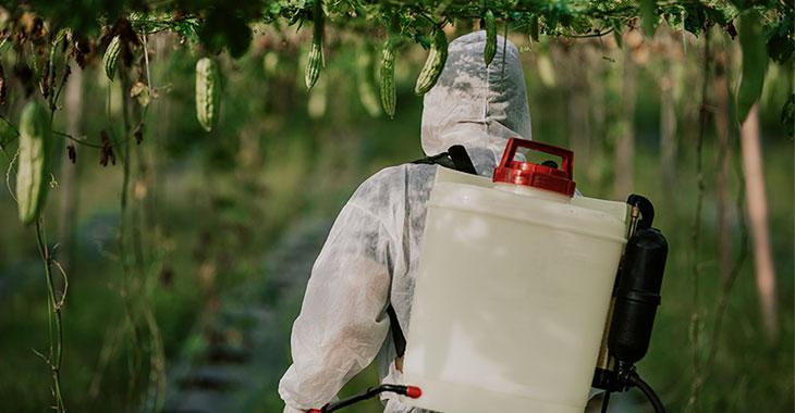 Landwirtin besprüht Pflanzen mit Pestiziden