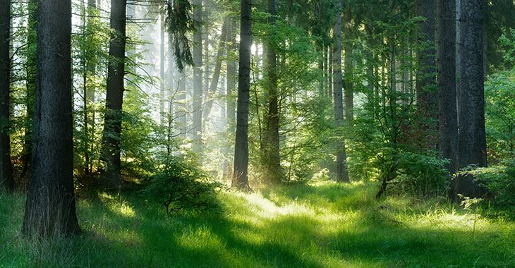 Waldlichtung im Sonnenschein | Foto: © istock.com/AVTG